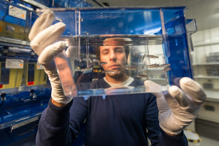 A researcher holding a tank of zebrafish up towards the camera