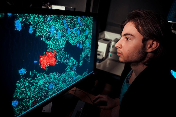a researcher looking at cells on a screen